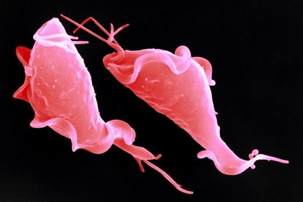 Как выглядит молочница в крови?